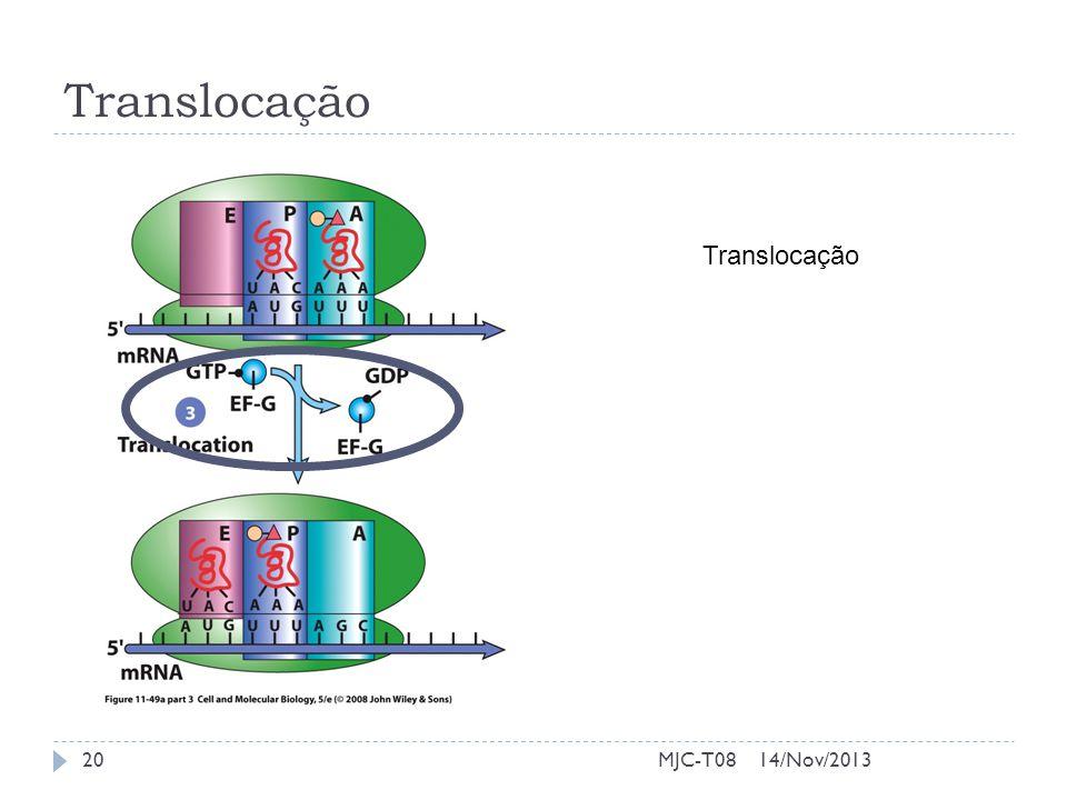Translocação 14/Nov/201320MJC-T08