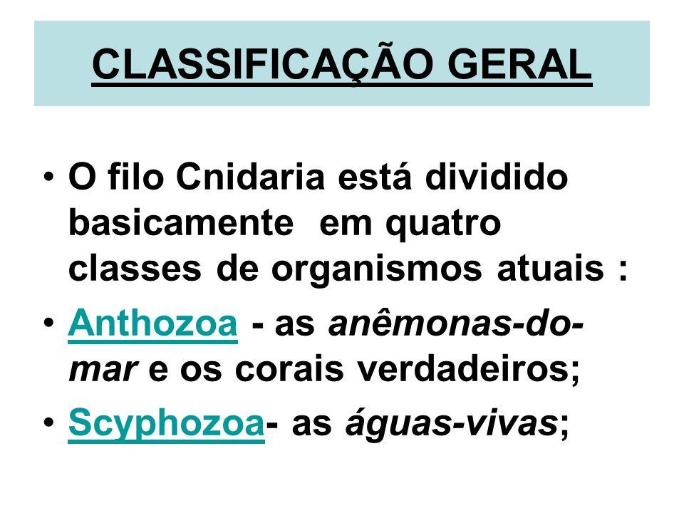 CLASSIFICAÇÃO GERAL O filo Cnidaria está dividido basicamente em quatro classes de organismos atuais : Anthozoa - as anêmonas-do- mar e os corais verdadeiros;Anthozoa Scyphozoa- as águas-vivas;Scyphozoa