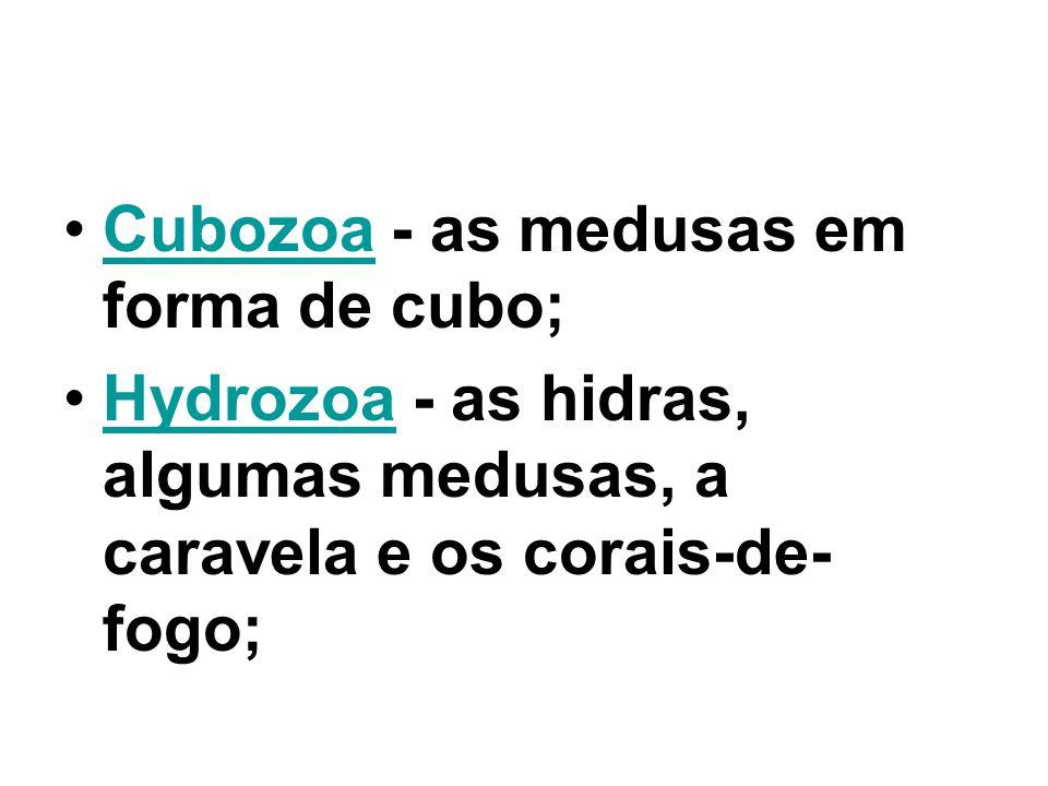 Cubozoa - as medusas em forma de cubo;Cubozoa Hydrozoa - as hidras, algumas medusas, a caravela e os corais-de- fogo;Hydrozoa