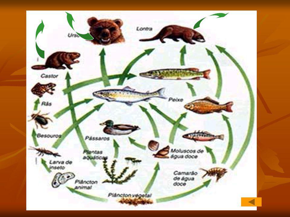 Fazer Após a compreensão do conceito de cadeia alimentar e a importância desta no equilíbrio do ecossistema, interpreta e analisa a figura no acetato 4.