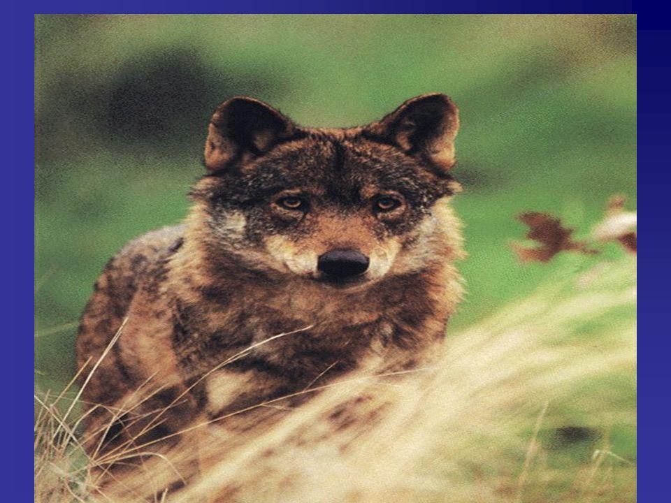 Porque há necessidade de criação de leis que protegem certas espécies e zonas sensíveis?
