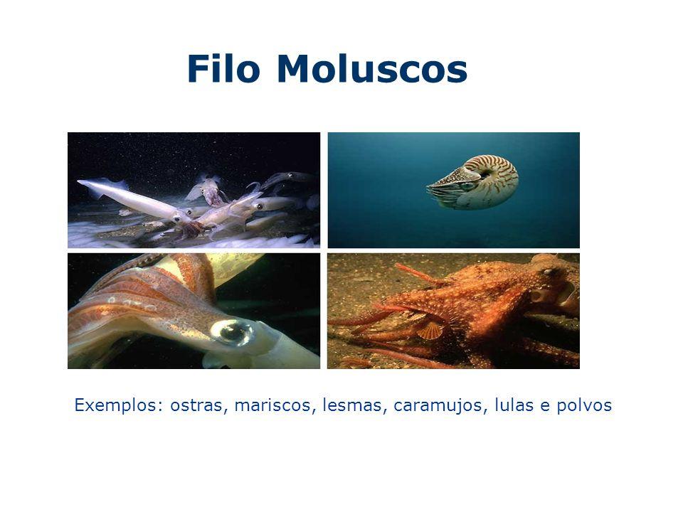 Moluscos Segundo maior filo do Reino animal (150 mil) O nome do filo refere-se a consistência macia e flexível do corpo, que podem ou não possuir concha calcaria.