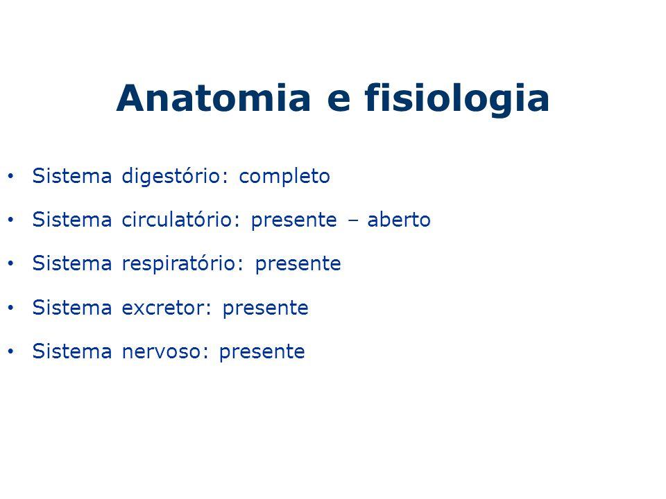 Anatomia e fisiologia Sistema digestório: completo Sistema circulatório: presente – aberto Sistema respiratório: presente Sistema excretor: presente S