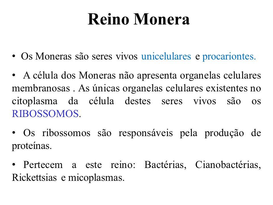 Os Moneras são seres vivos unicelulares e procariontes. A célula dos Moneras não apresenta organelas celulares membranosas. As únicas organelas celula