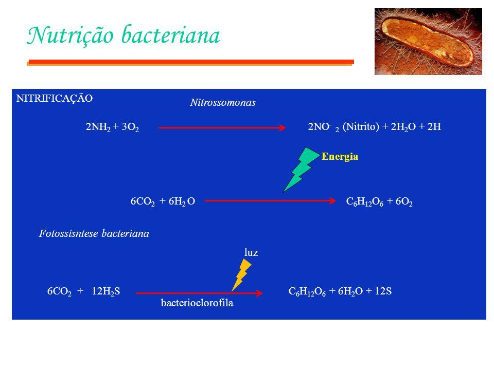 Nutrição bacteriana NITRIFICAÇÃO 2NH 2 + 3O 2 2NO - 2 (Nitrito) + 2H 2 O + 2H Nitrossomonas Energia 6CO 2 + 6H 2 O C 6 H 12 O 6 + 6O 2 6CO 2 + 12H 2 S