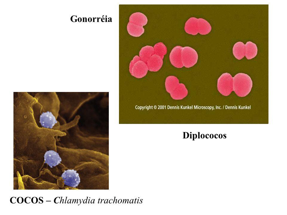 COCOS – Chlamydia trachomatis Diplococos Gonorréia