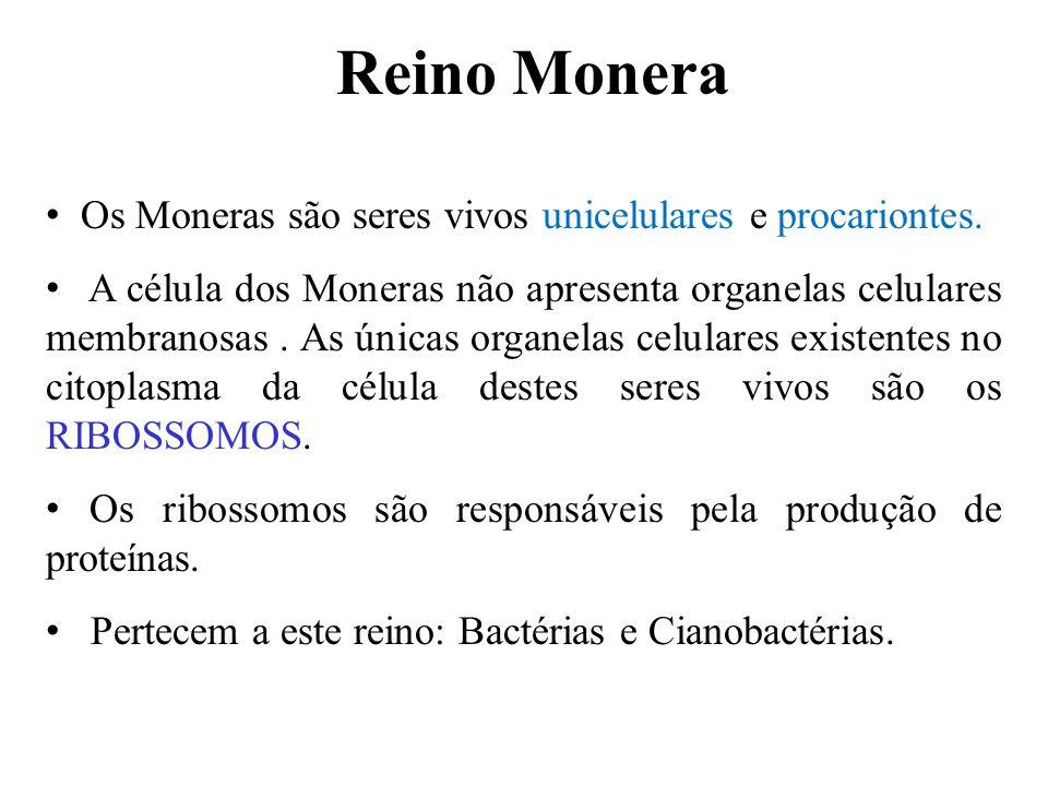 O Reino MONERA se divide em: Filo Schizophyta (bactérias) Filo Cyanophyta (Cianobactérias ou cianofíceas ou popularmente algas azuis)