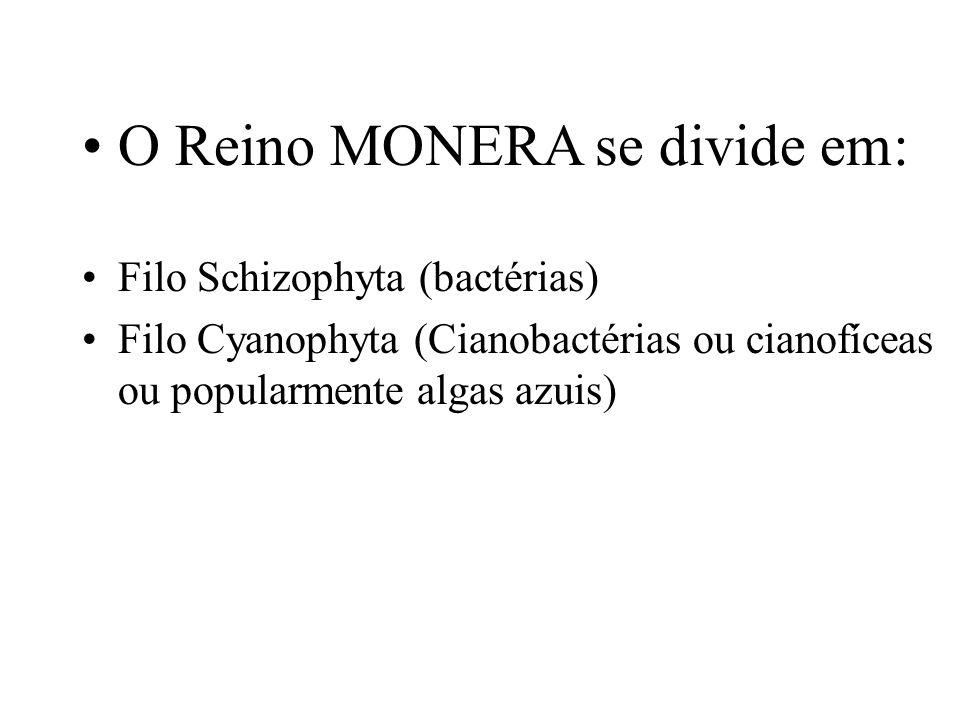 As Bactérias - A palavra bactéria vem do Grego, onde bakteria significa bastão.