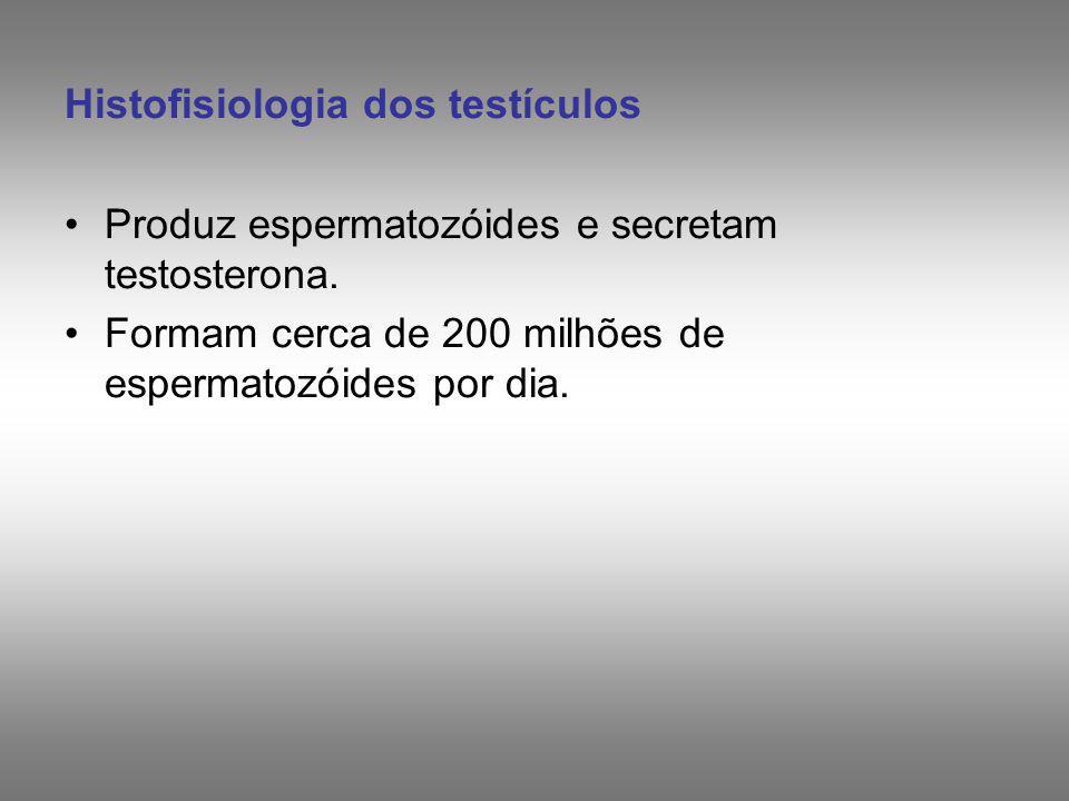 SÊMEN Espermatozóides + material das glândulas anexas: - Vesículas Seminais - Próstata - Glândulas Bulbouretrais Volume varia de 1 a 5 ml O número de espermatozóides (por ejaculação) normalmente varia de 50 a 100 milhões / ml (pode variar de 20 a 250 milhões/ml).