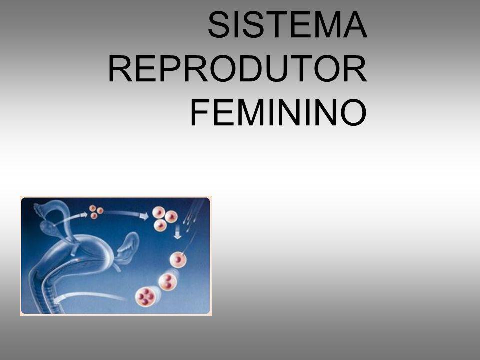 Fatores que interferem na espermatogênese –Deficiências nutricionais –Temperatura testicular elevada Sauna Febre Vestimentas –Hormônios, antiandrogênicos, estrogênios –Infecções locais ou gerais –Drogas, álcool –Radiação, choque elétrico –Caxumba –Criptorquidia quando os testículos não descem no período fetal, ocorre inibição da espermatogênese, não ocorrendo inibição de produção dos hormônios sexuais masculinos.