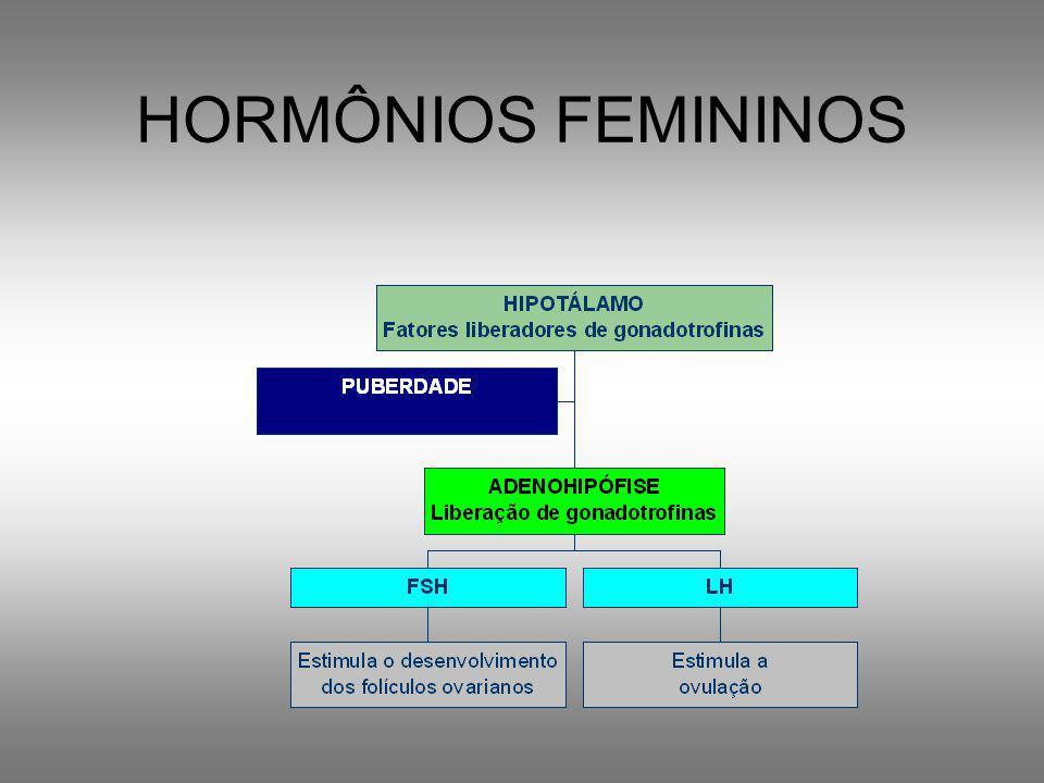 Tubas uterinas Infundíbulo Ovário Ligamento dos ovários ÚteroColo do útero Vagina Aparelho reprodutor feminino Endométrio
