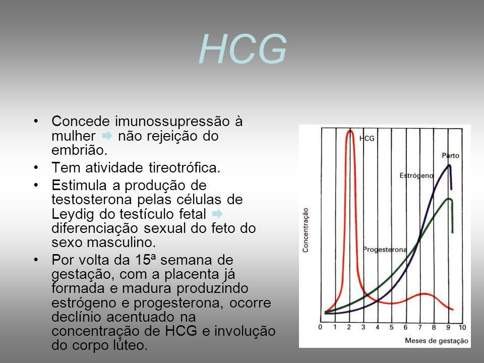 HORMÔNIOS DA GRAVIDEZ 1- Gonadotrofina coriônica humana (HCG): hormônio glicoproteíco, secretado pelas células do trofoblasto após nidação mantém o corpo lúteo manutenção das taxas de progesterona e estrogênio manutenção da gravidez, inibição da menstruação e ausência de nova ovulação.