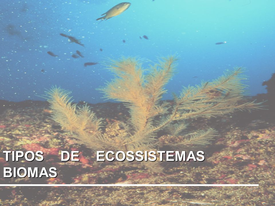 Biomas Áreas com ecossistemas específicos – são grandes ecossistemas A superfície terrestre apresenta, em toda sua extensão, uma grande diversidade de habitat, que leva a uma grande variedade de seres vivos (biodiversidade).