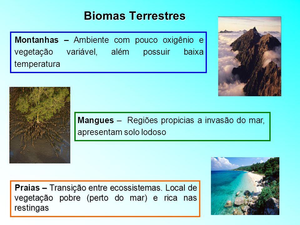 Biomas Terrestres – Transição entre ecossistemas. Local de vegetação pobre (perto do mar) e rica nas restingas Praias – Transição entre ecossistemas.
