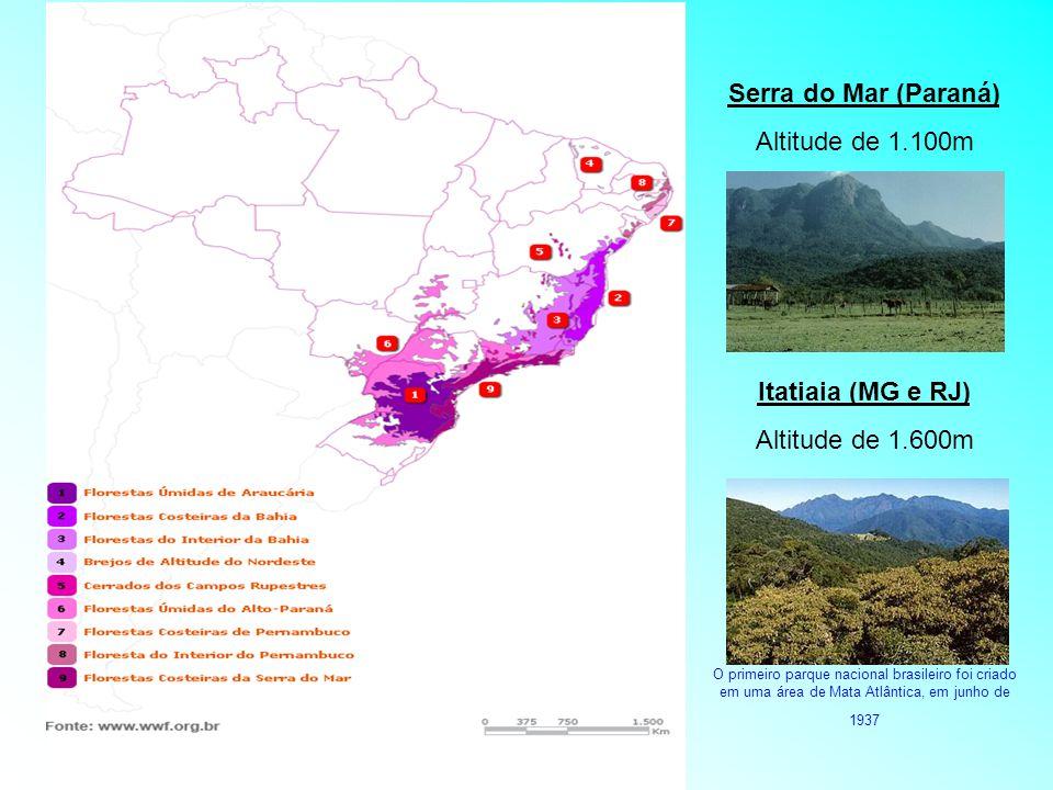 Serra do Mar (Paraná) Altitude de 1.100m Itatiaia (MG e RJ) Altitude de 1.600m O primeiro parque nacional brasileiro foi criado em uma área de Mata At