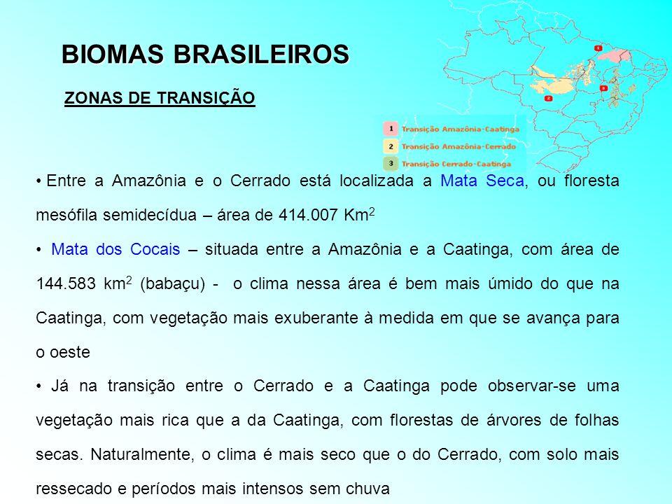 BIOMAS BRASILEIROS Entre a Amazônia e o Cerrado está localizada a Mata Seca, ou floresta mesófila semidecídua – área de 414.007 Km 2 Mata dos Cocais –