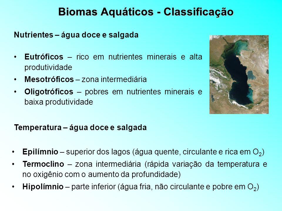 Biomas Aquáticos - Classificação Eufótica – zona iluminada (produtividade intensa) 100 m no Oceano Disfótica – pouca iluminação Afótica – zona obscura (ausência de vegetação e presença de carnívoros Luz solar – água doce e salgada Plânctons – organismos flutuantes Néctons – seres que podem se deslocar (peixes, tartarugas, mamíferos) Bêntons – Vivem fixos no fundo, no lodo ou sobre outros organismos (vermes) Classificação dos organismos aquáticos