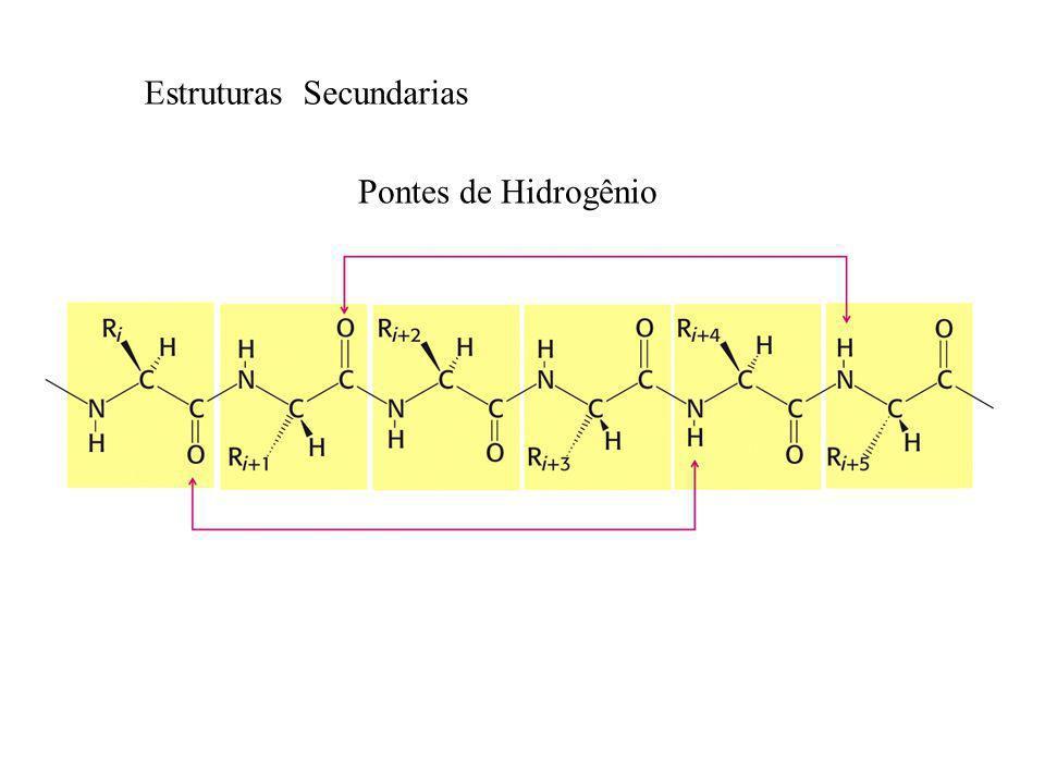 Pontes de Hidrogênio Estruturas Secundarias