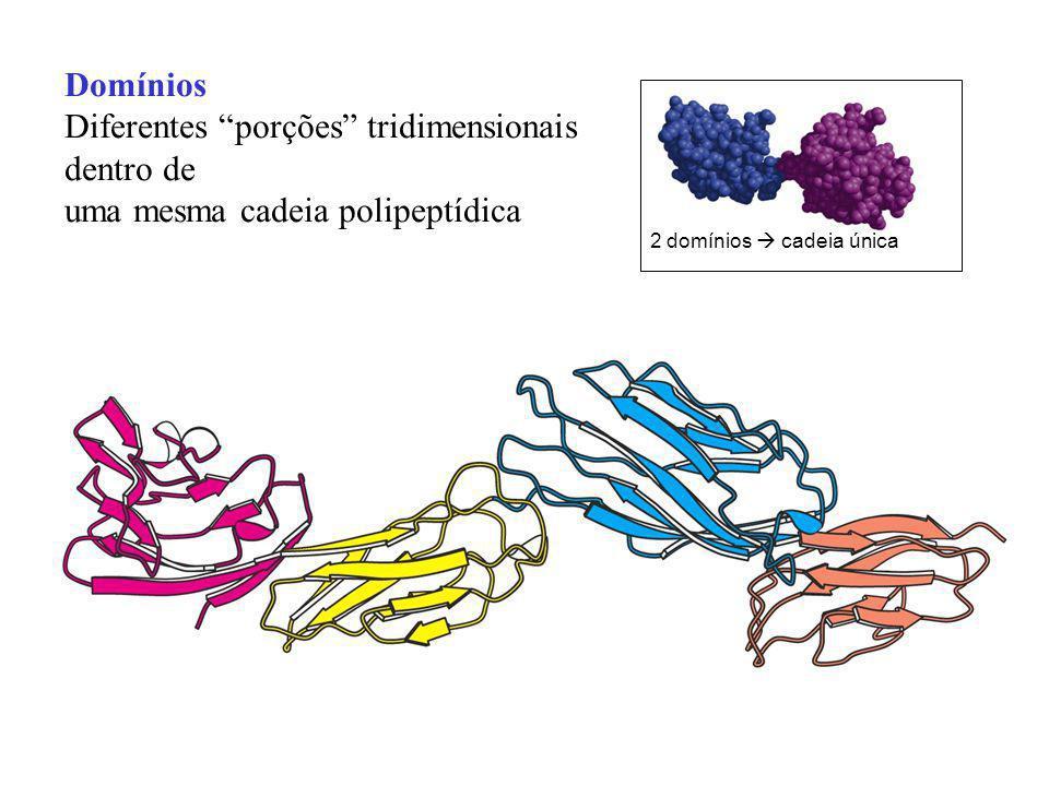 Domínios Diferentes porções tridimensionais dentro de uma mesma cadeia polipeptídica 2 domínios cadeia única