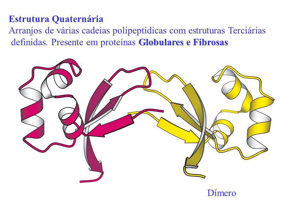 Estrutura Quaternária Arranjos de várias cadeias polipeptídicas com estruturas Terciárias Globulares e Fibrosas definidas. Presente em proteínas Globu