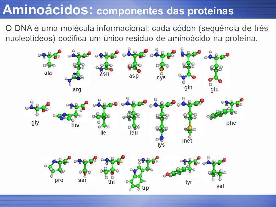 Aminoácidos: componentes das proteínas ala arg asn asp cys gln glu gly his ileleu lys met phe proser thr trp tyr val O DNA é uma molécula informaciona