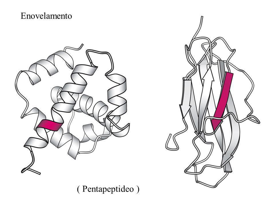 Enovelamento ( Pentapeptideo )