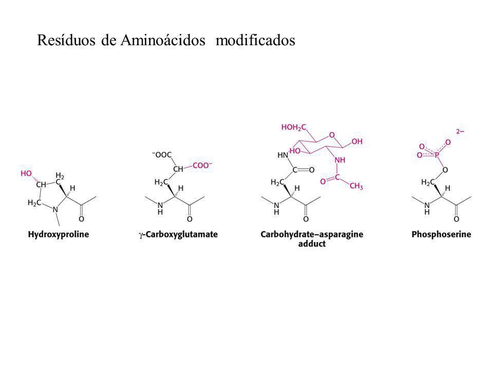 Resíduos de Aminoácidos modificados