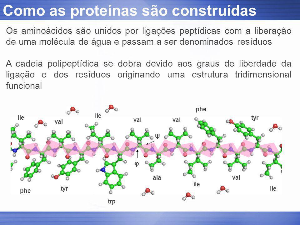 Como as proteínas são construídas phe val tyr trp ala ile φ ψ Os aminoácidos são unidos por ligações peptídicas com a liberação de uma molécula de águ