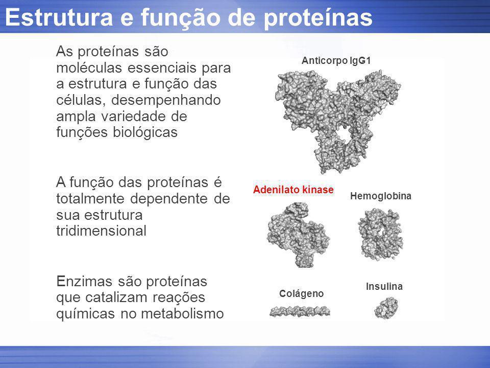 Estrutura e função de proteínas Colágeno Anticorpo IgG1 Hemoglobina Insulina Adenilato kinase As proteínas são moléculas essenciais para a estrutura e
