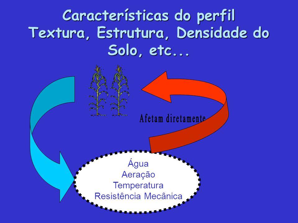 Características do perfil Textura, Estrutura, Densidade do Solo, etc... Água Aeração Temperatura Resistência Mecânica