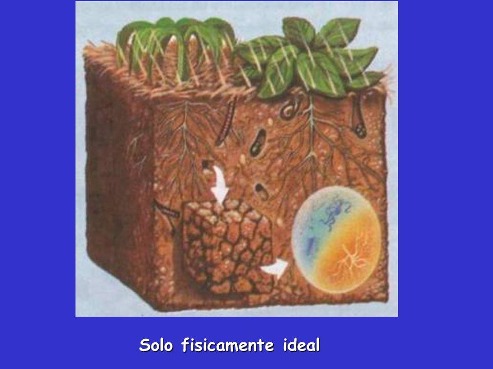 A textura é importante para o entendimento do comportamento e manejo do solo.
