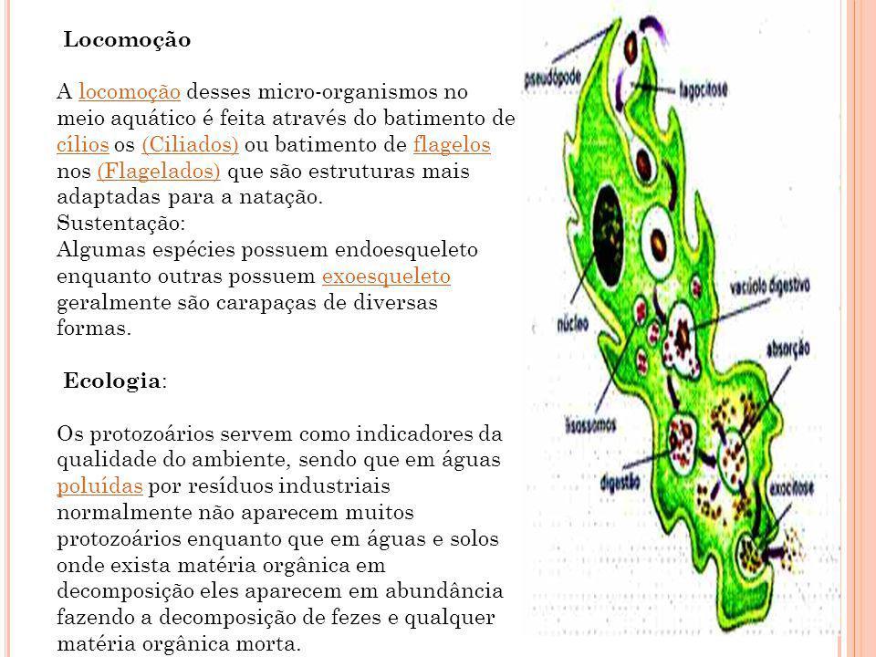 Locomoção A locomoção desses micro-organismos no meio aquático é feita através do batimento de cílios os (Ciliados) ou batimento de flagelos nos (Flag