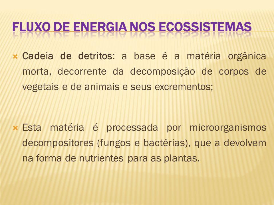  Ex. cadeia alimentar aquática  Ex. de cadeia alimentar terrestre