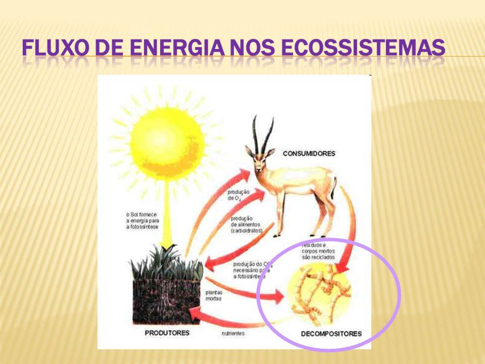  O conhecimento das cadeias alimentares permite agir sobre elas, como no caso manejo integrado de pragas: Minimização do uso de agrotóxicos pela utilização de predadores naturais – Controle Biológico.
