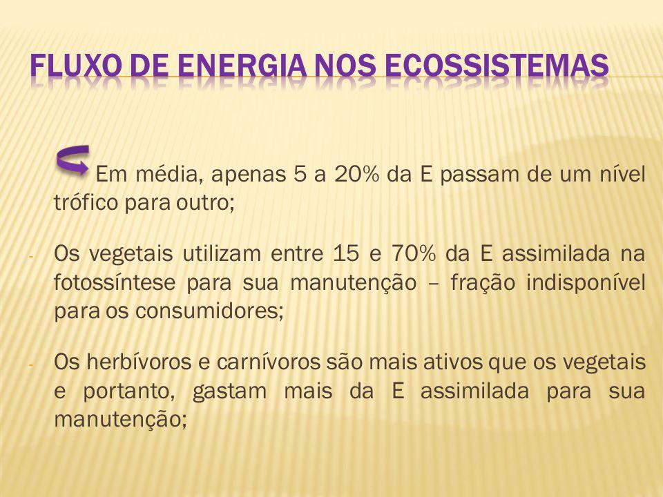 - A porcentagem de E transferida de um nível trófico a outro: eficiência ecológica.