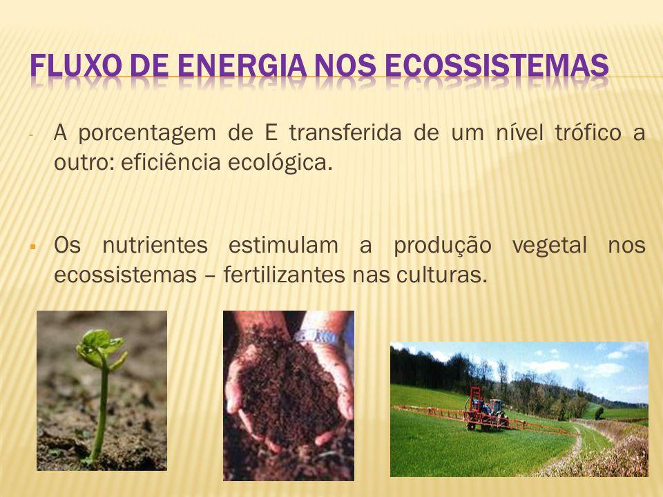  Pirâmides Ecológicas - São representações quantitativas de cadeias alimentares; - Construção: produtores – representados na base; vindo a seguir, em degraus superiores, os consumidores de diversas ordem; - 3 tipos de pirâmides: