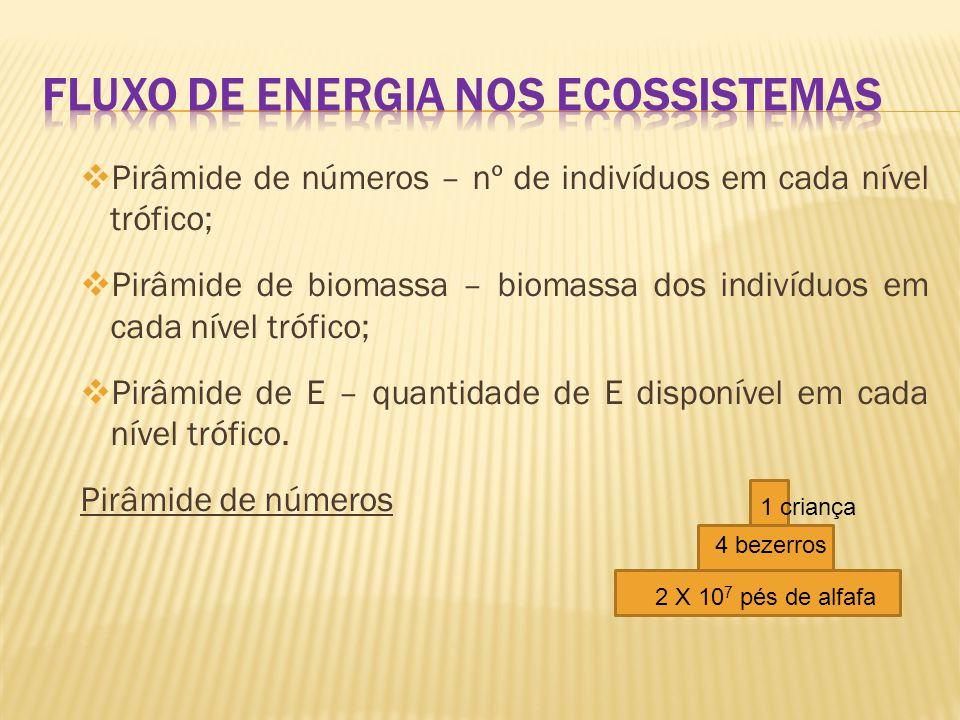  Pirâmide de números – nº de indivíduos em cada nível trófico;  Pirâmide de biomassa – biomassa dos indivíduos em cada nível trófico;  Pirâmide de E – quantidade de E disponível em cada nível trófico.
