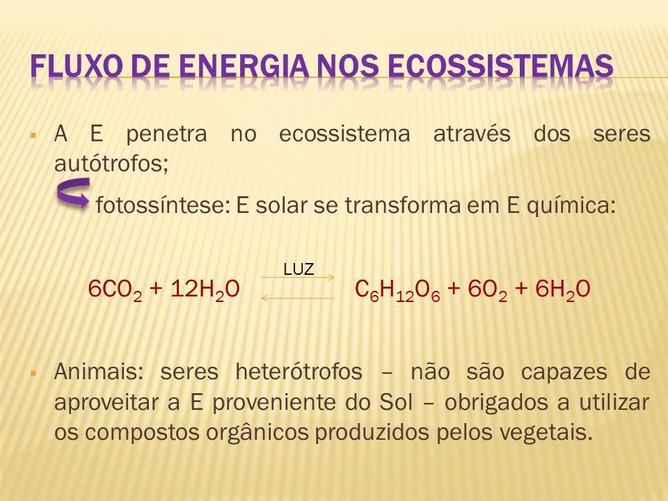  Assim, os componentes bióticos de um ecossistema formam na ordem: produtoresconsumidores decompositores, um sistema de complexas relações inter- alimentares – Cadeia Alimentar.