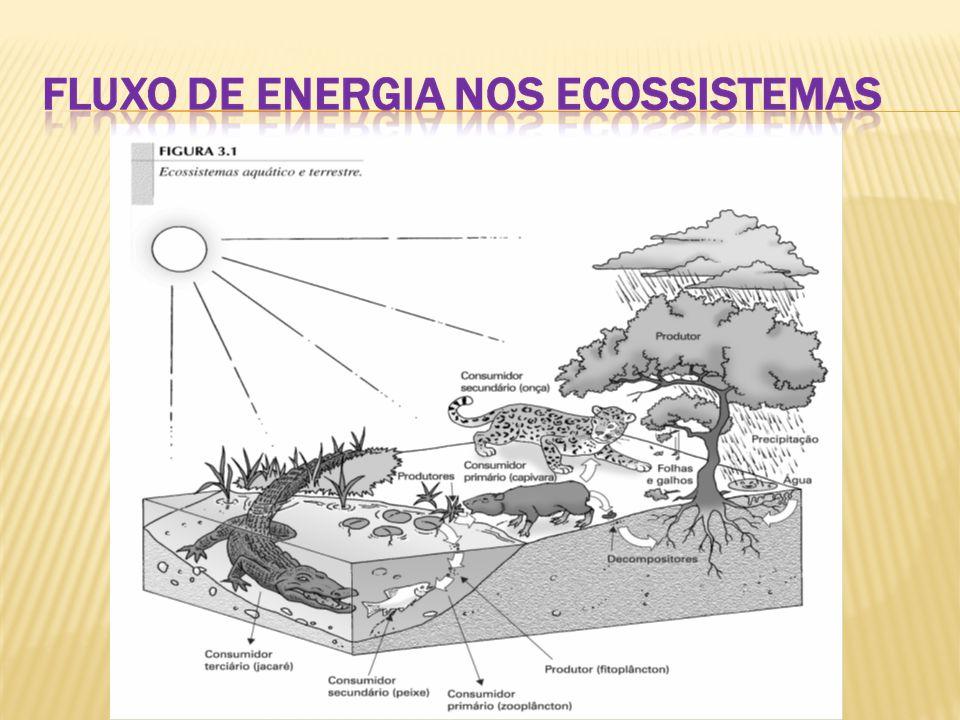 Cadeia alimentar: Caminho seguido pela energia no ecossistema, desde os vegetais fotossintetizantes até os diversos organismos que deles se alimentam e servem de alimento para outros.