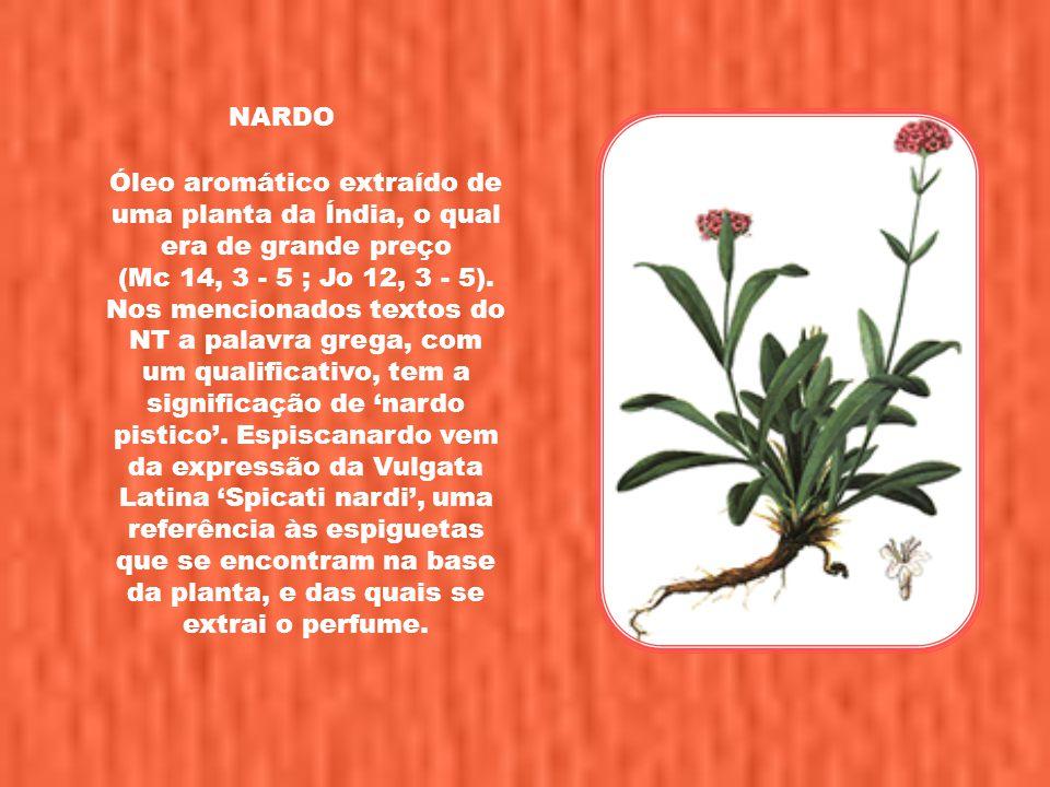 Visite nosso site em: www.tesouroescondido.com Para receber novos pps, envie e-mail para: meditacaosextafeira@gmail.com