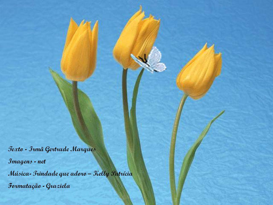 Texto - Irmã Gertrude Marques Imagens - net Música- Trindade que adoro – Kelly Patrícia Formatação - Graziela