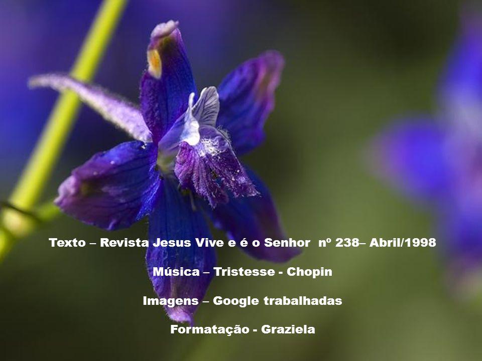 Pai Eterno, eu vos ofereço as Chagas de nosso Senhor Jesus Cristo para curar as chagas das nossas almas. Meu Jesus, perdão e misericórdia pelos mérito