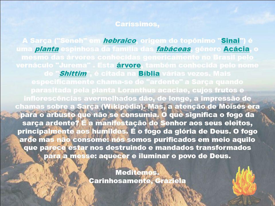 Caríssimos, A Sarça ( Seneh em hebraico, origem do topônimo Sinai ) é uma planta espinhosa da família das fabáceas, gênero Acácia, o mesmo das árvores conhecidas genericamente no Brasil pelo vernáculo Jurema .