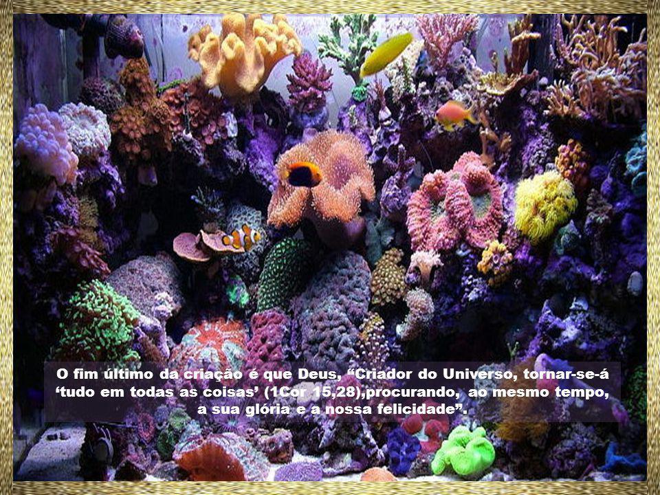 O fim último da criação é que Deus, Criador do Universo, tornar-se-á tudo em todas as coisas (1Cor 15,28),procurando, ao mesmo tempo, a sua glória e a nossa felicidade.