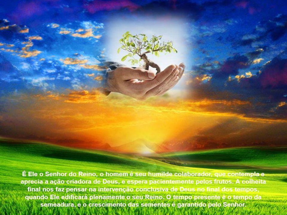 Na primeira parábola, o foco é sobre o dinamismo da semeadura: a semente que é lançada sobre a terra, seja que o agricultor adormeça ou desperte, brot