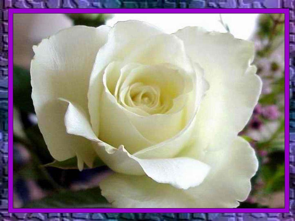 Caríssimos, Hoje, 02 de novembro, é o dia dedicado aos mortos.