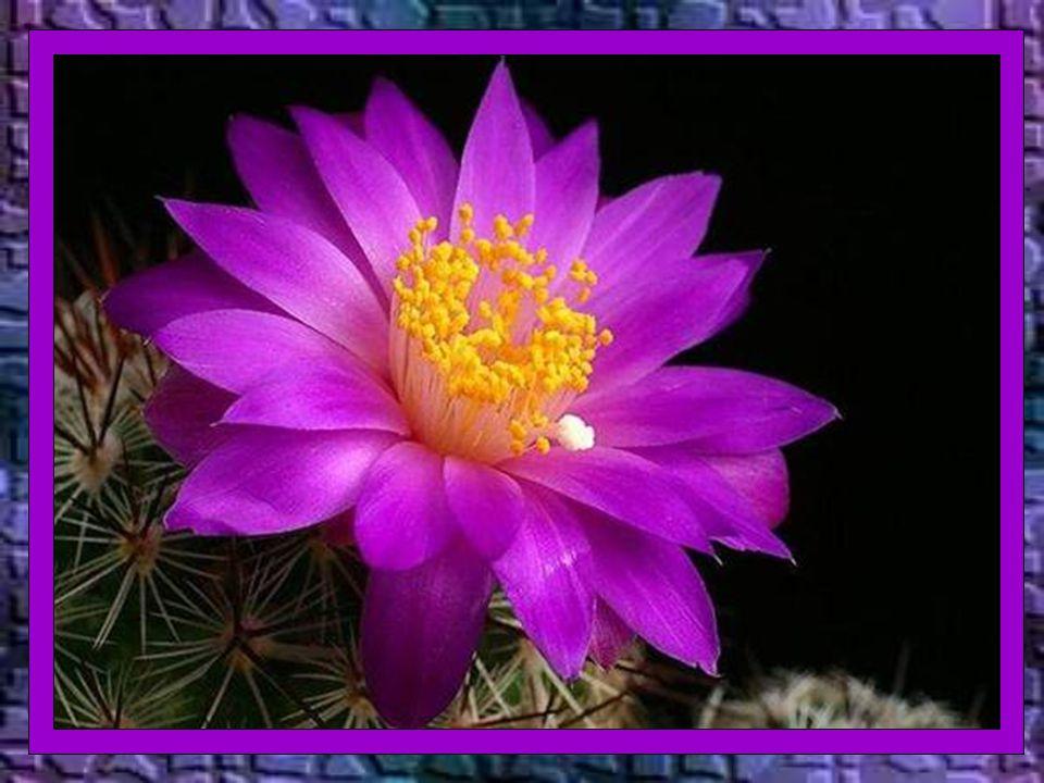 Deus – diz o livro da Sabedoria – não é o autor da morte, nem se alegra com a perdição dos vivos (1,13) A morte corporal é uma passagem à verdadeira vida, comunhão beatificante e sem fim com Deus.