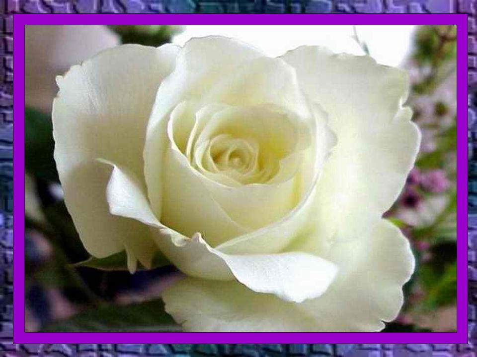 Nos santos a fé e o amor os move na alegria do encontro com Cristo. São Paulo nos diz em: Filipenses 1,21:...para mim o viver é Cristo e o morrer é lu