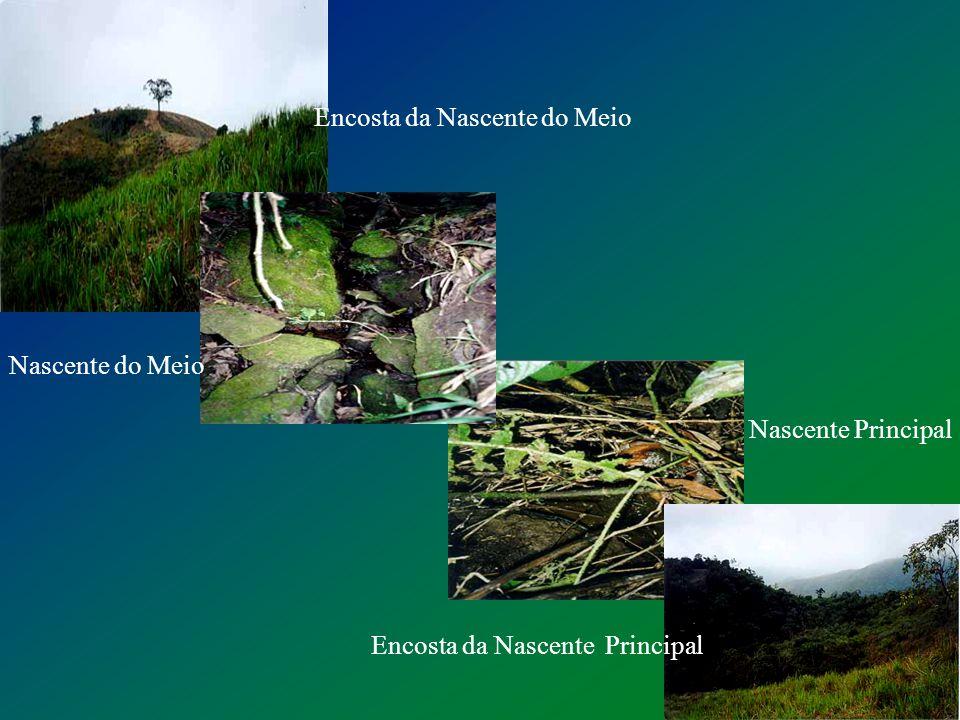 A 4ª nascente do ribeirão Tabuão ou Lorena é a nascente principal? Qual a situação da Área de Preservação Permanente dessa nascente? Problema Em 2002,
