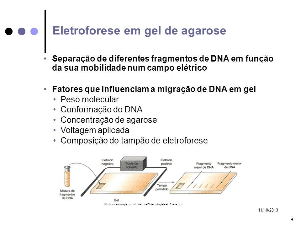 11/10/2013 4 Separação de diferentes fragmentos de DNA em função da sua mobilidade num campo elétrico Fatores que influenciam a migração de DNA em gel